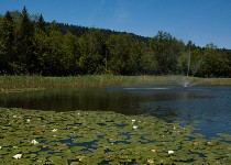 Großansicht Teich mit Seerosen im  Bregenzerwald