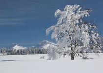 Großansicht Verschneite Landschaft