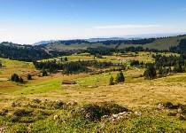 Großansicht Almlandschaft Bregenzer Wald