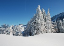 Großansicht Bregenzer Wald im Winter