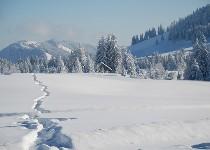 Großansicht Spuren in der Schneelandschaft
