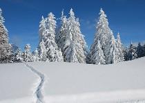 Großansicht Spuren im Schnee